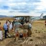 Hayward Safaris Arrivals
