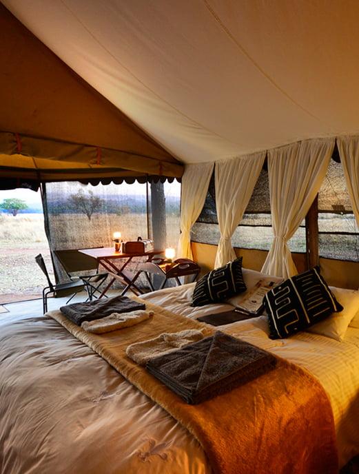 Hayward Safaris