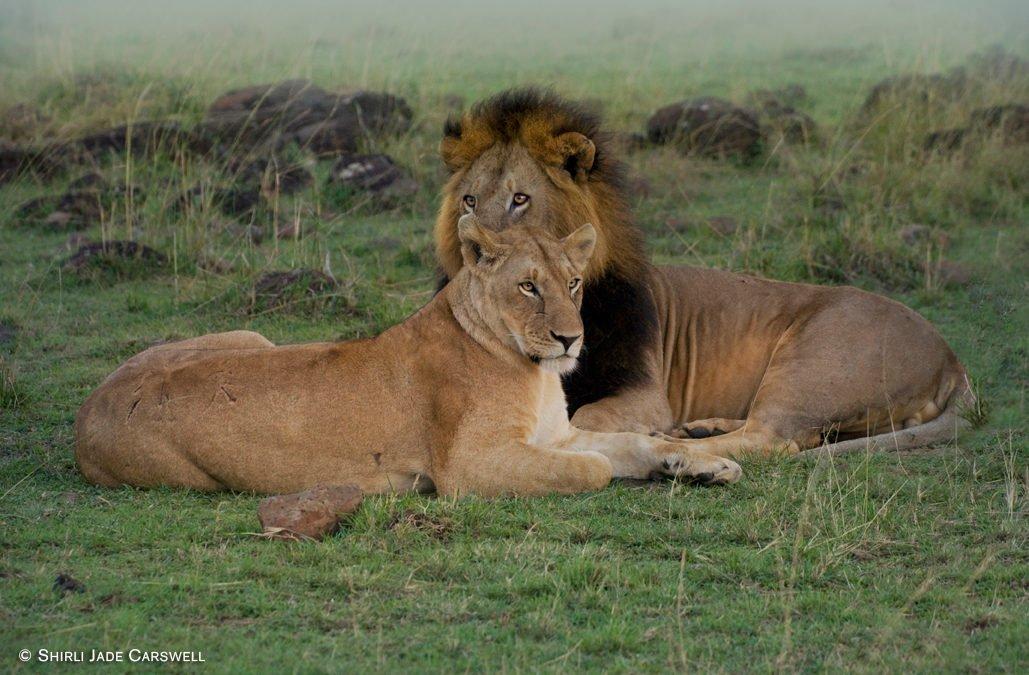 What life's safari journey has taught me