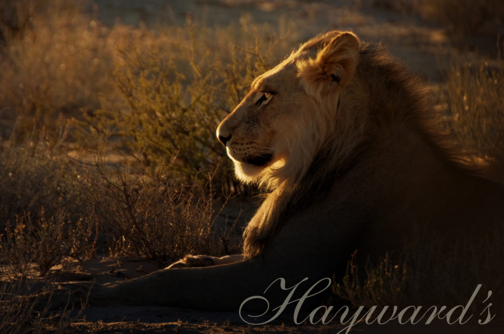 Big 5 walking safaris with Hayward Safaris South Africa