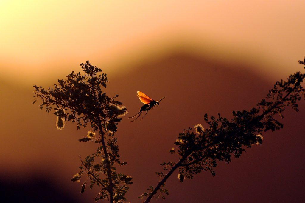 insect life at dusk on safari
